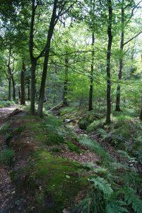 nr6: Wandelen in ons bos